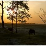 04 Bihar's unspectacular-spectacular landscape